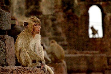 Monkey temple in Lopburi